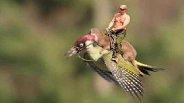 150304090952_meme_putin_woodpecker_credit_martin_le-may_640x360_martinlemay_nocredit